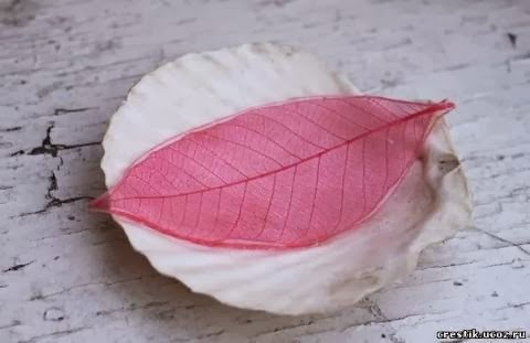 DIY Beautiful and Colorful Skeleton Leaves 8